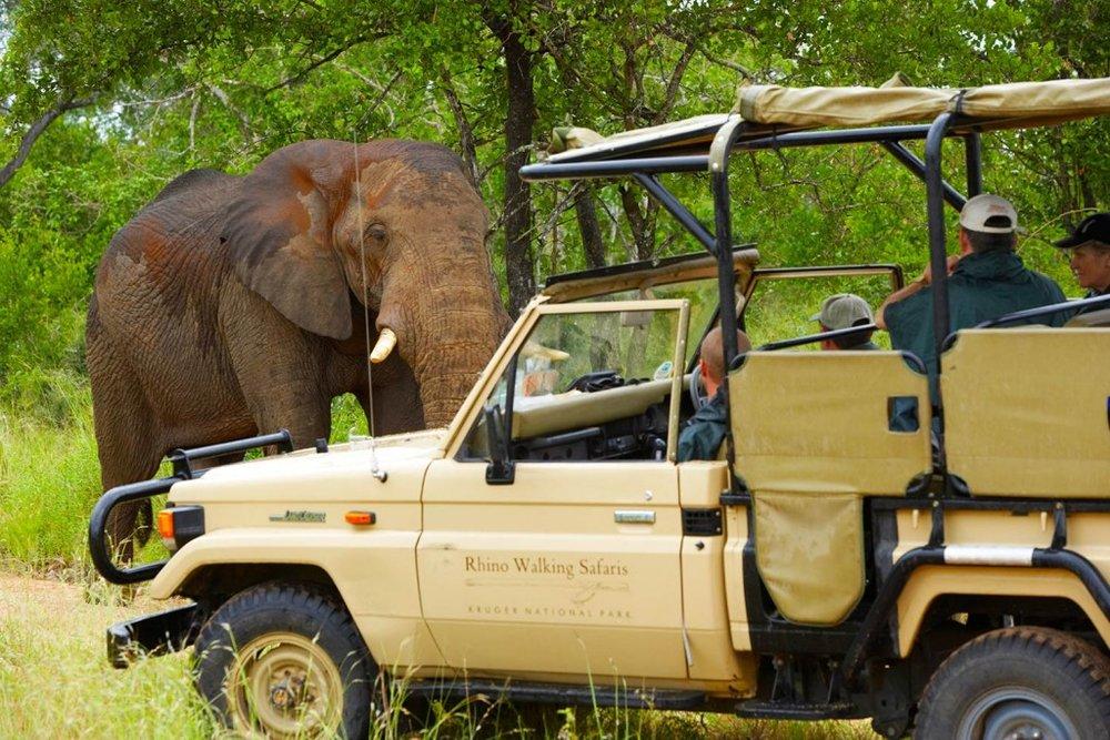 SAFARI EN 4X4 - L'activité de l'après-midi comprend une courte promenade (45 minutes) combinée à un safari.