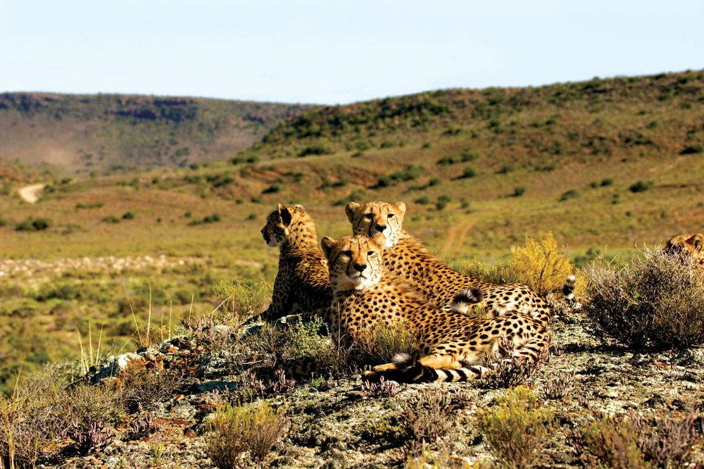 sanbona_wildlife_6_resize.jpg