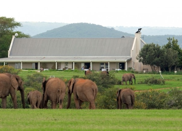 elephants_at_river_bend_1.jpg
