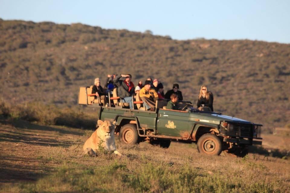 Safari sur La Route des Jardins -