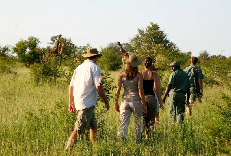 Safaris à pied -
