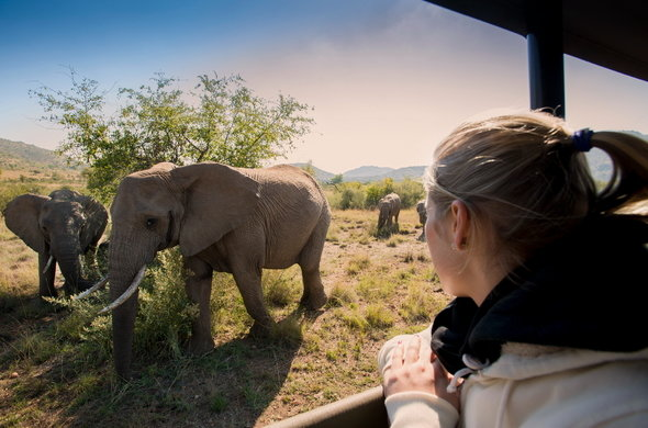 bakubung-bush-lodge-elephants-590x390.jpg