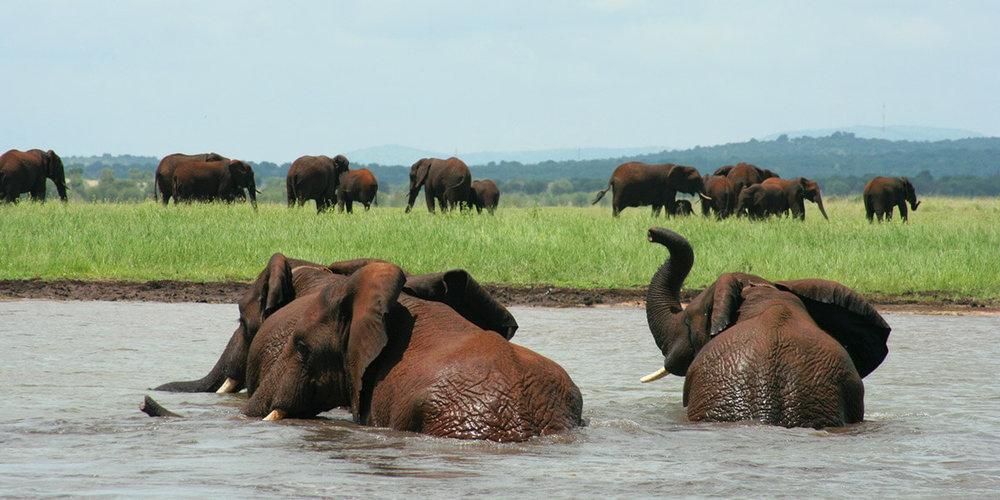 Agence_de_voyage_afrique_Cap_Ou_Pas_Cap_Afrique_du_sud_Safari211.jpg
