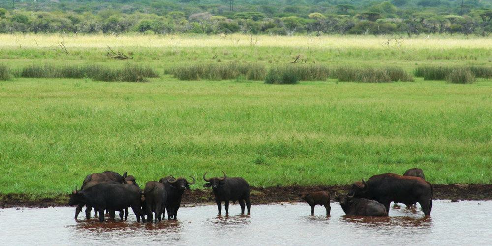 Agence_de_voyage_afrique_Cap_Ou_Pas_Cap_Afrique_du_sud_Safari213.jpg