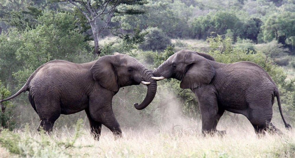 Agence_de_voyage_afrique_Cap_Ou_Pas_Cap_Afrique_du_sud_Safari224.jpg