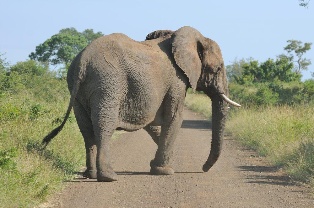 2013-02-23_06-27-02_South_Africa_Mpumalanga_-_Kruger_National_Park.JPG