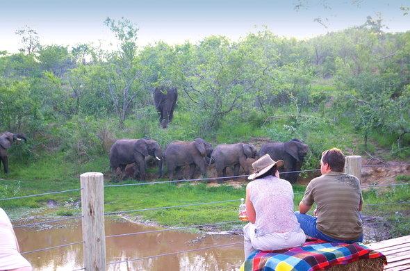elephant-whispers-elephant-mud-bath-590x390.jpg