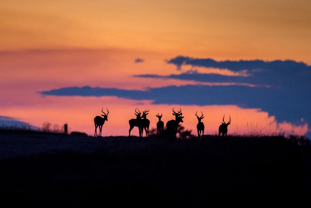 agence_de_voyage_et_safaris_en_afrique_capoupascap_cap_ou_pas_cap_afrique_du_sud_le_parc_national_kruger4.jpg