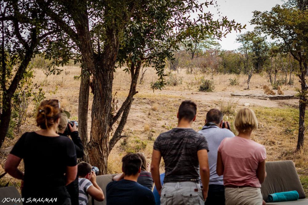 agence_de_voyage_vacance_afrique_safari_le_parc_national_kruger_afrique_du_sud_capoupascap_cap_ou_pas_cap_voyage_safari_tente_de_lux_Sanbona_Bayethe_Lodge_08.jpg