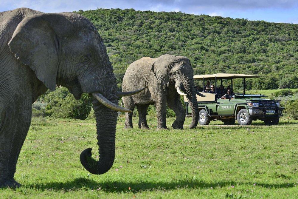 Agence_de_voyage_safari_enfants_afrique_du_sud_capoupascap_voyage_riverdene_lodge_shamwari07.jpg