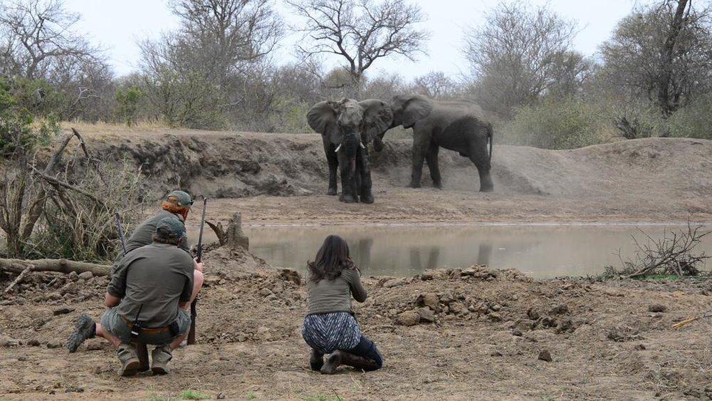 agence_de_voyage_et_safaris_en_afrique_capoupascap_cap_ou_pas_cap_afrique_du_sud_le_parc_national_kruger_africa_on_foot12.jpg