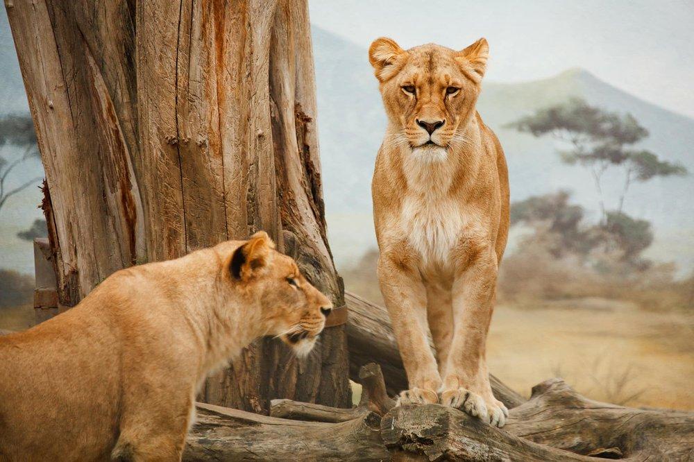 Big 5 Safari -