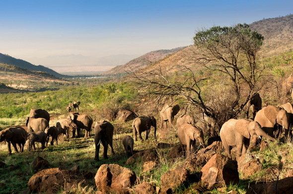 Agence_de_voyages_basée_en_Afrique_Tours_et_voyage_à_Cape_Town_et_les_vignobles_Voyage_de_noces avec_CapOuPasCap_Voyage_Pilansberg2.jpg