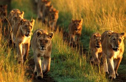 Agence_de_voyages_basée_en_Afrique_Tours_et_voyage_à_Cape_Town_et_les_vignobles_Voyage_de_noces avec_CapOuPasCap_Voyage_Pilansberg4.jpg