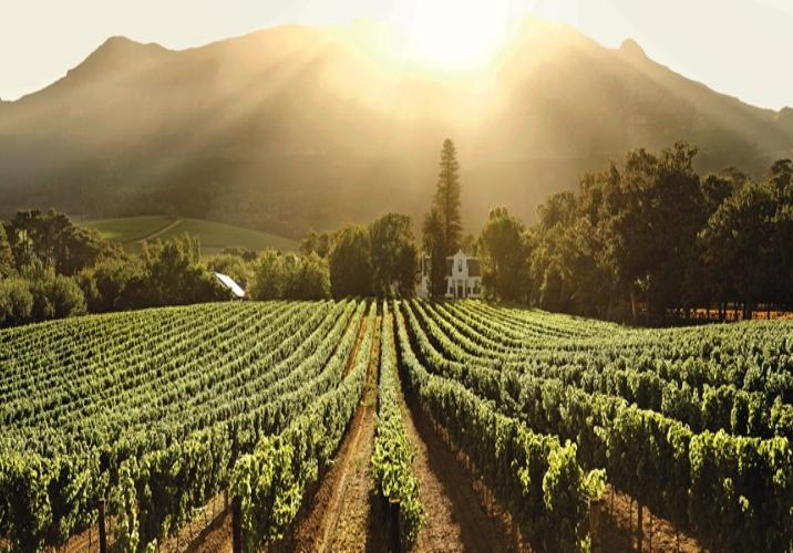 Agence de voyages basée en Afrique-Afrique du Sud-Cape Winelands-cape ville-lune de miel-Cape Town- Stellenbosch-Franschhoek.jpg