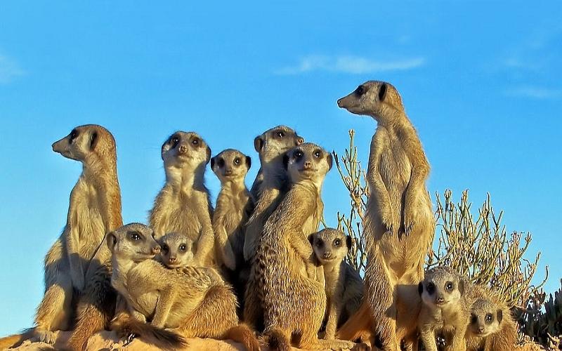 Agence_de_voyages_basée_en_Afrique_Tours_et_voyage_à_Cape_Town_et_les_vignobles_Voyage_de_noces avec_CapOuPasCap_Voyage_oudtshoorn_cango caves3.jpg