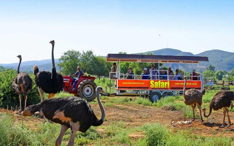Agence_de_voyages_basée_en_Afrique_Tours_et_voyage_à_Cape_Town_et_les_vignobles_Voyage_de_noces avec_CapOuPasCap_Voyage_oudtshoorn_cango caves4.jpg