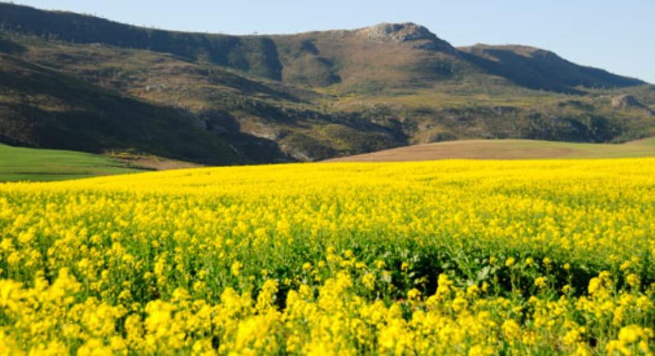 Agence_de_voyages_basée_en_Afrique_Tours_et_voyage_à_Cape_Town_et_les_vignobles_Voyage_de_noces avec_CapOuPasCap_Voyage_la_route_des_jardins_riversdale4.jpg