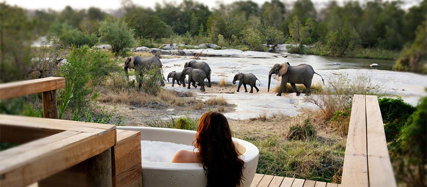 Travel_agency_based_in_South_Africa_Safaris_Sejour Activités_Kruger park_Panoramic route_la_kruger_national_parc_Londolozi_founders_camp3.jpg