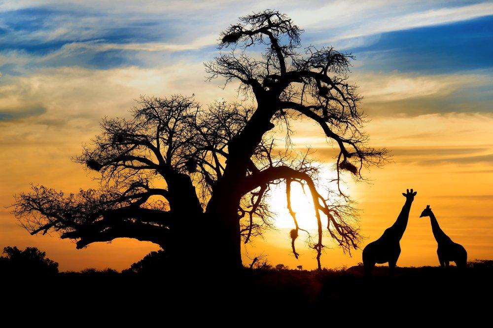Cape Town & Kruger   - Ce circuit vous emmène à la découverte des deux destinations d'aventure et d'écotourisme en Afrique du Sud.Là où la région du Cap a la ville avec la mer, les montagnes, les vignobles et une riche histoire, le parc national Kruger vous offre l'opportunité d'apprécier la faune africaine à bord d'un véhicule ouvert ou à pied. Cet itinéraire combine de beaux paysages avec des activités passionnantes.                                                                                              8 jours / 7 nuits