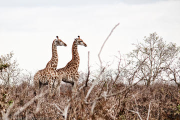 kruger-national-park-2-days-open-vehicle-in-maputo-526310.jpg