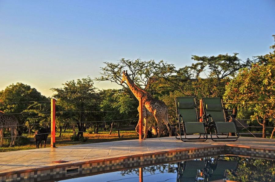 Agence_de_voyages_basée_en_Afrique_Tours_et_voyage_à_Cape_Town_et_les_vignobles_Voyage_de_noces avec_CapOuPasCap_Voyage_Hoedspruit2.jpg
