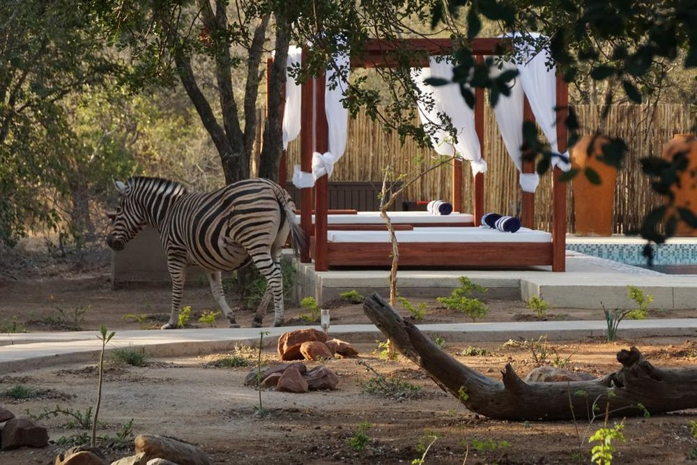Travel_agency_based_in_South_Africa_Safaris_Sejour Activités_Kruger park_Panoramic route_Nelspruit_hoedspruit_bush_baby_river_lodge7.jpg