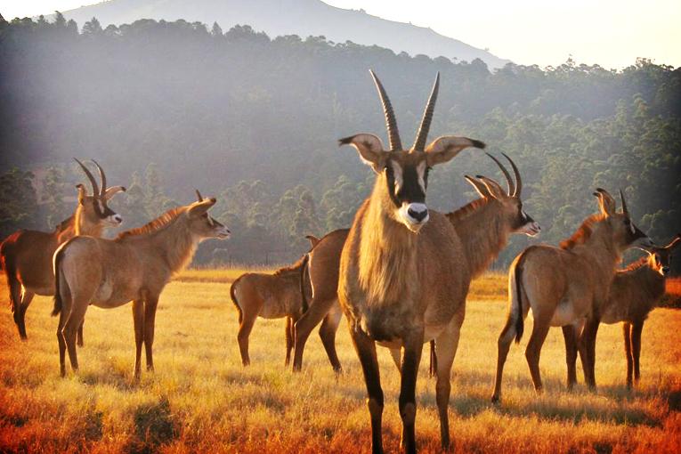 Swaziland-1.jpg