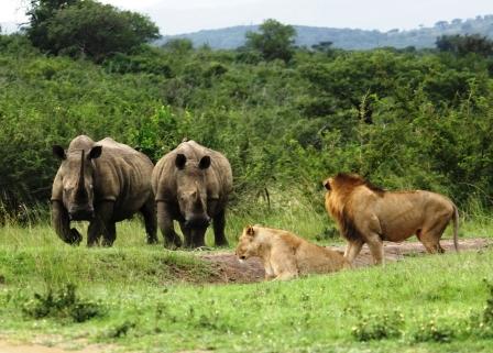 hluhluwe_imfolozi_tours_safaris.jpg