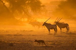 Safaris sur Le Cap -
