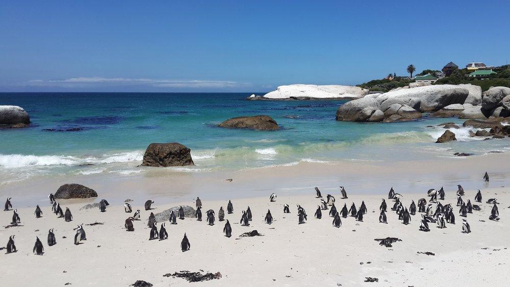 penguins-857208.jpg