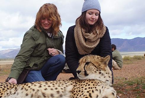 cheetah-interaction05.jpg