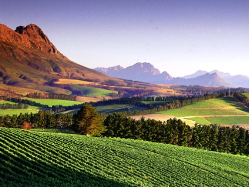 best-things-to-do-in-cape-town-stellenbosch.jpg