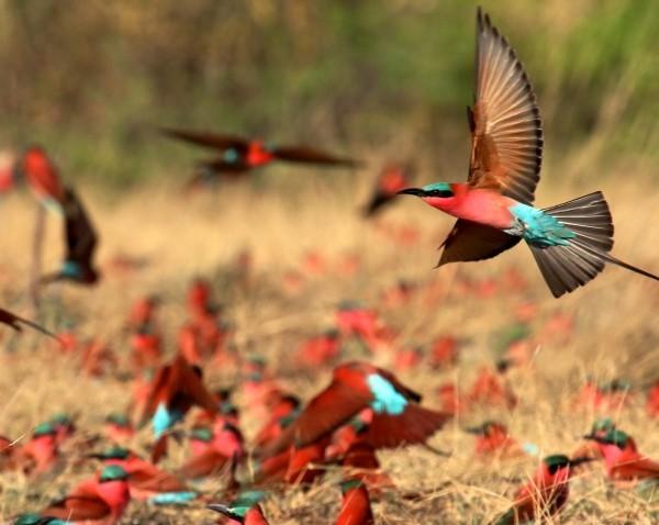 Observation des oiseaux - Si vous aimez l'observation des oiseaux,le KwaZulu Natal est fait pour vous. Il ya une énorme quantité de beaux et rares oiseaux africains à voir dans le KwaZulu Natal.