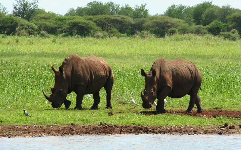 Agence_de_voyage_afrique_Cap_Ou_Pas_Cap_Afrique_du_sud_Safari219.jpg