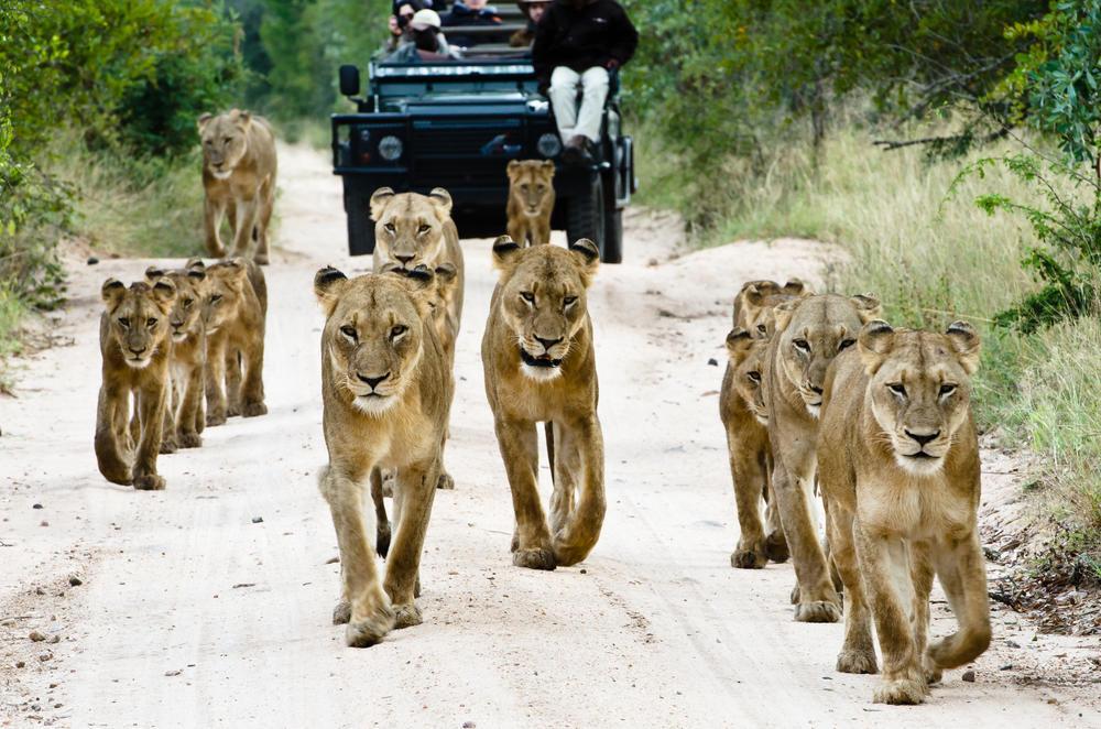 Cape Town & Kruger - - 8 jours /7 nuitsCe circuit vous emmène à la découverte des deux destinations d'aventure et d'écotourisme en Afrique du Sud. Là où la région du Cap a la ville avec la mer, les montagnes, les vignobles et une riche histoire, le parc national Kruger vous offre l'opportunité d'apprécier la faune africaine à bord d'un véhicule ouvert ou à pied.