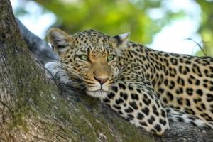 Où aller au Parc Kruger ? -