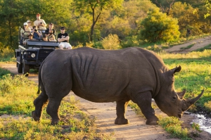 Safaris romantiques -