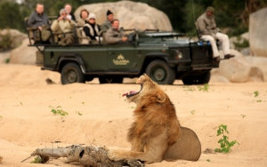 Autre destinations de safari -