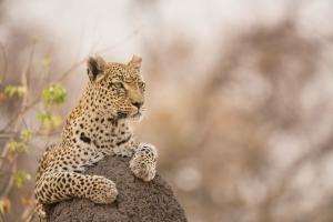 Safaris sur la route des jardins -