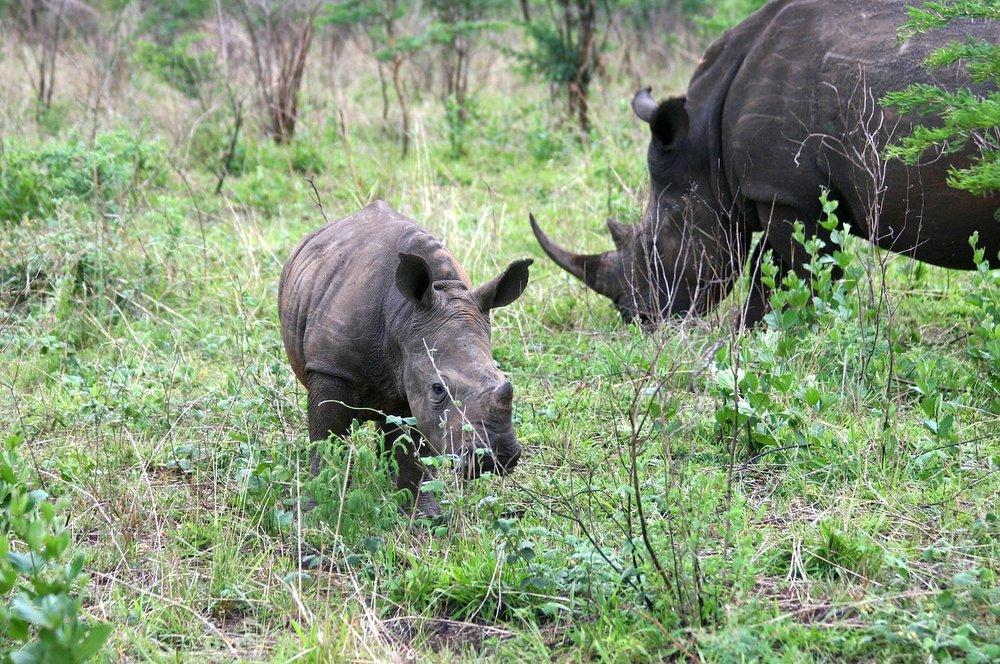 Cape Town & Kruger - - 8 jours / 7 nuitsCe circuit vous emmène à la découverte des deux destinations d'aventure et d'écotourisme en Afrique du Sud. Là où la région du Cap a la ville avec la mer, les montagnes, les vignobles et une riche histoire, le parc national Kruger vous offre l'opportunité d'apprécier la faune africaine à bord d'un véhicule ouvert ou à pied.