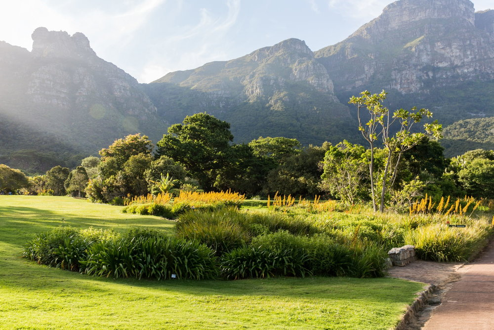 blogs2048x1365_how-to-plan-your-visit-to-kirstenbosch-national-botanical-gardens-min.jpg