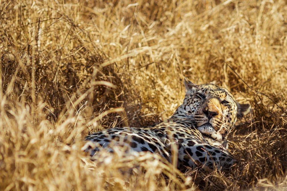 Safari sans Paludisme -