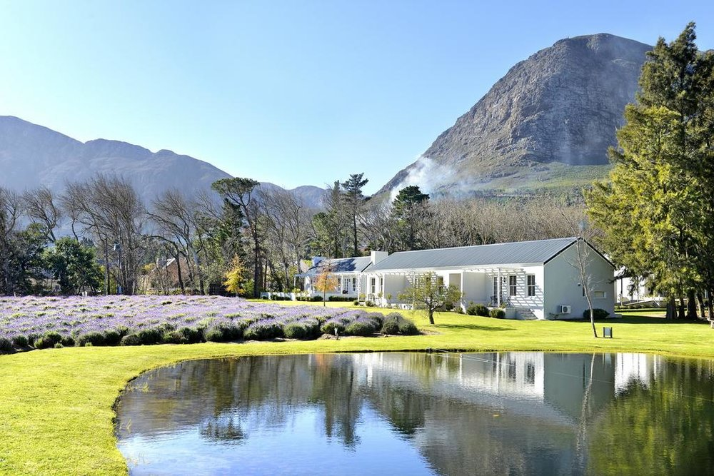 Agence_de_voyages_basée_en_Afrique_Tours_et_voyage_à_Cape_Town_et_les_vignobles_Voyage_de_noces avec_CapOuPasCap_Voyage_Corner house_Cape Town_Le cap_Lavender Farm Guest house3.jpg