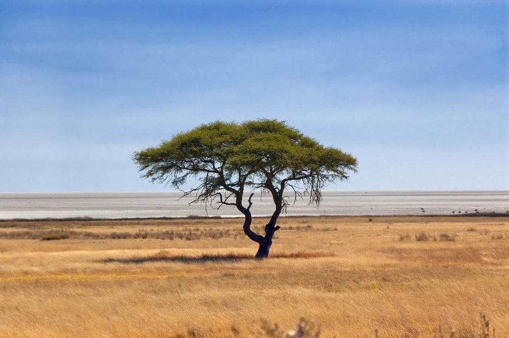 Etosha-Vegetation.jpg