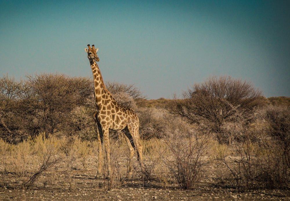 namibia-2949420_1920-min.jpg