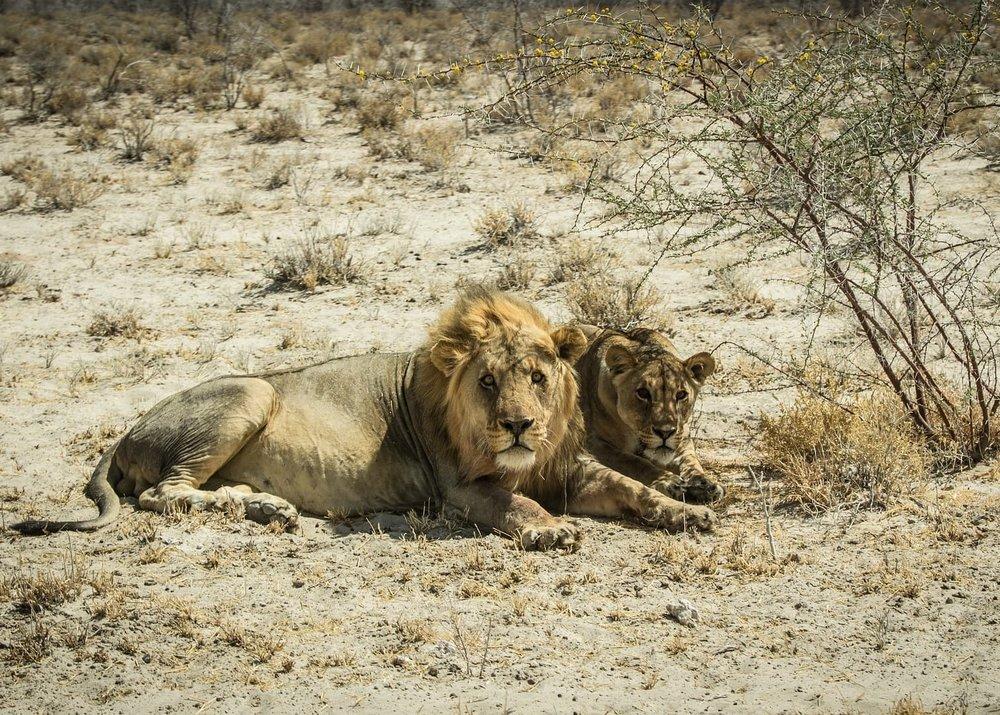 namibia-2939057_1920-min.jpg