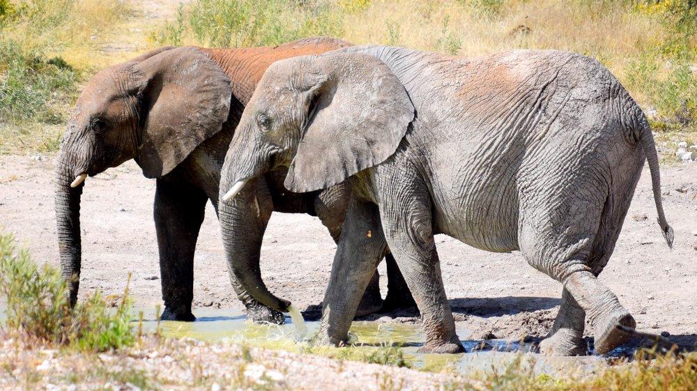 elephant-3405593-min.jpg
