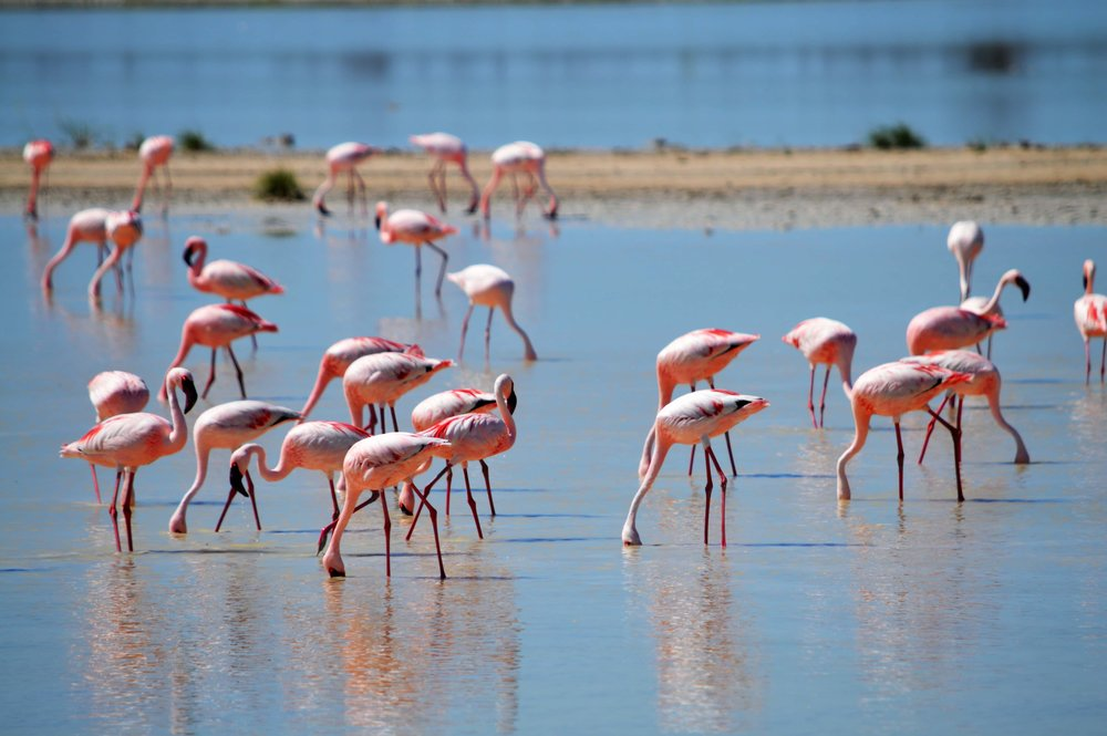 flamingos-2037497-min.jpg