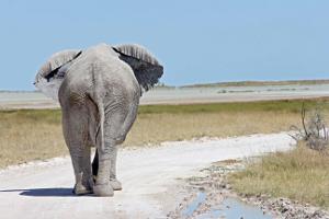 Moringa                               - C'est le circuit phare, qui inclut toutes les visites classiques, ainsi que quelques « plus ». Le parc national d'Etosha, l'un des plus grands parcs animaliers d'Afrique ; le Damaraland et sa faune sauvage et les majestueuses dunes de Sossusvlei.12 jours / 11 nuits